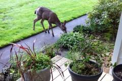 landscaping-mistakes-curb-appeal-bushes-deer_f757f446a977745ebe6eaecd9cb4ed5d_3x2_jpg_570x380_q85