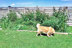 how-keep-dogs-out-garden_b5a497b6cb91d54bc6939ab04f09deff_3x2_jpg_600x400_q85