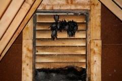 attic-pest-removal-bats_077dfc911c824b1c4359398a712791bd_3x2_jpg_300x200_q85