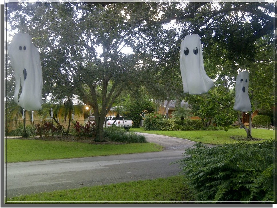 palmetto bay palm frond ghosts