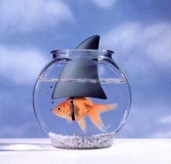 Big-Fish-Little-Pond